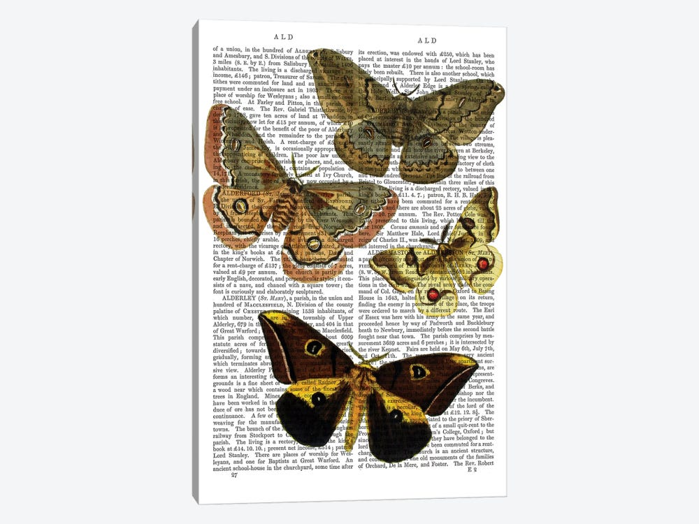 Moth Plate III by Fab Funky 1-piece Canvas Art Print