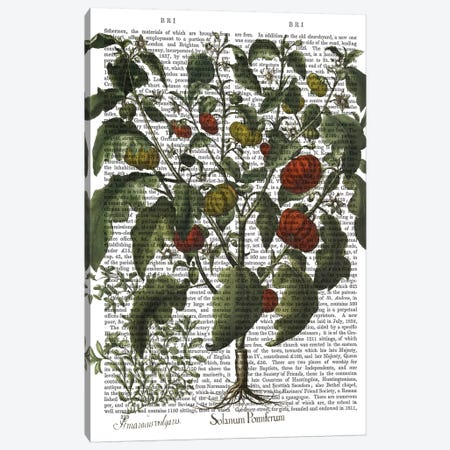 Peppers II Canvas Print #FNK1216} by Fab Funky Canvas Print