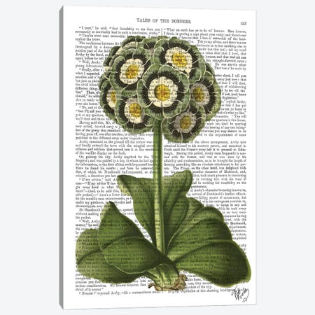 Primula Auricula Blue Canvas Print #FNK1225} by Fab Funky Canvas Artwork