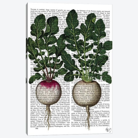 Radishes Print Canvas Print #FNK1249} by Fab Funky Art Print