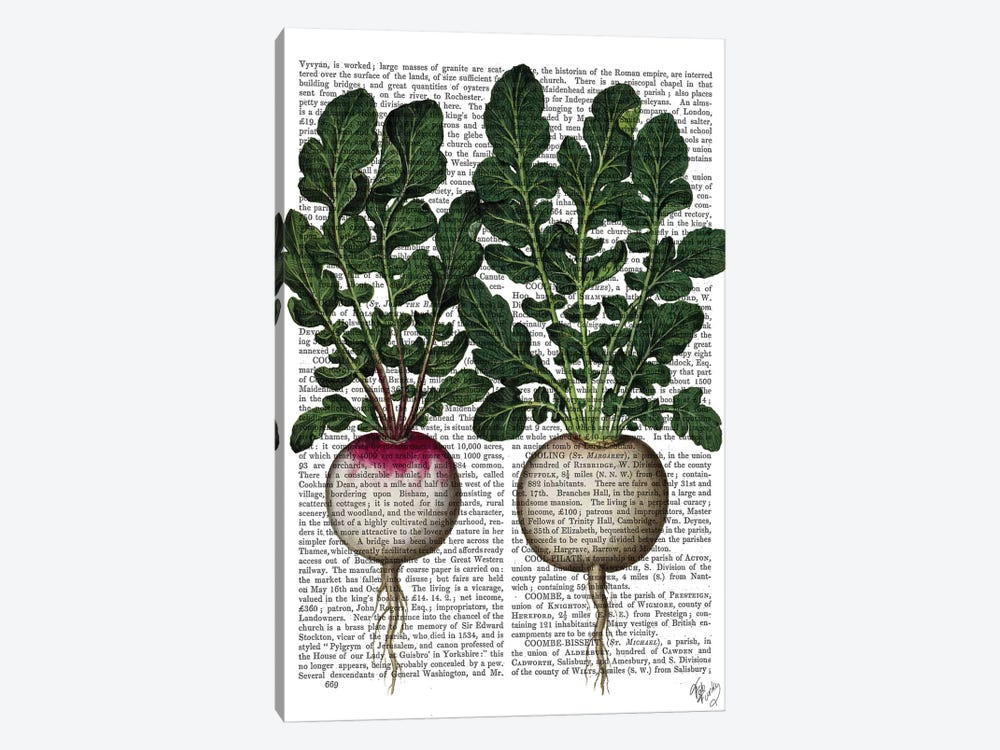 Radishes Print by Fab Funky 1-piece Canvas Art Print