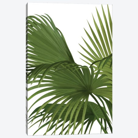 Another Fan Palm II Canvas Print #FNK124} by Fab Funky Canvas Artwork