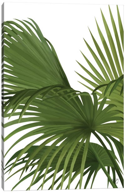 Another Fan Palm II Canvas Print #FNK124