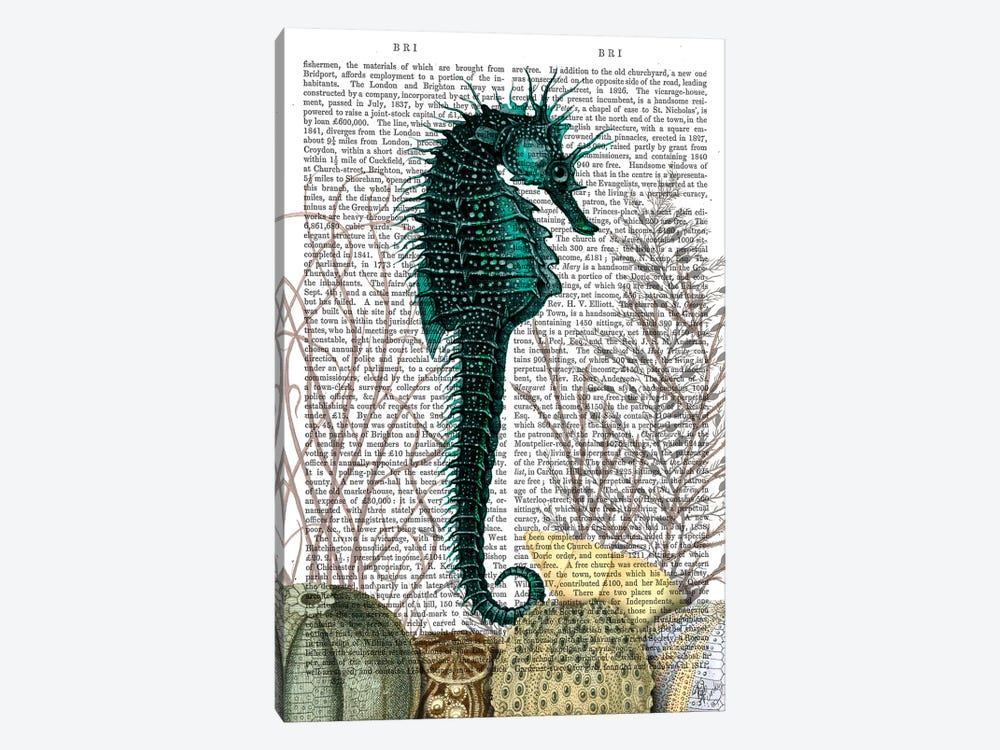 Seahorse & Sea Urchins, Print BG by Fab Funky 1-piece Canvas Artwork