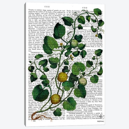 Squash Vine IV Canvas Print #FNK1273} by Fab Funky Canvas Art