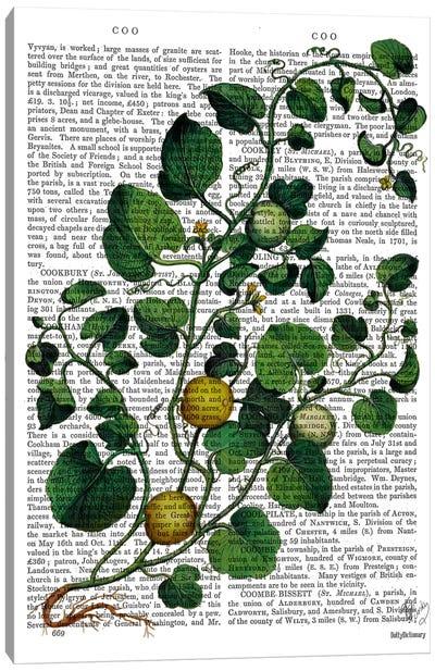 Squash Vine IV Canvas Art Print