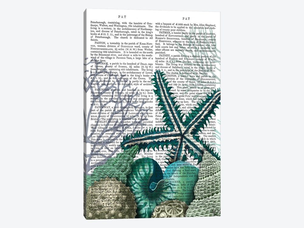 Starfish Under The Sea, Print BG by Fab Funky 1-piece Canvas Art