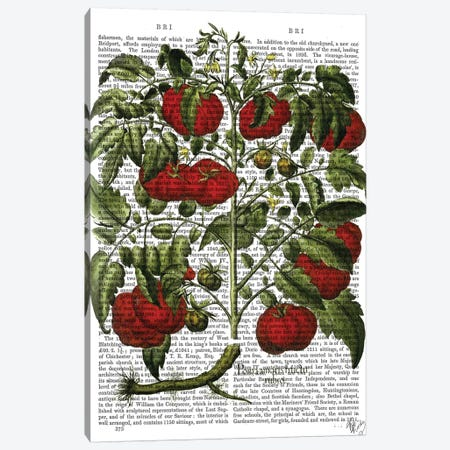Tomato Plant Canvas Print #FNK1296} by Fab Funky Canvas Art Print