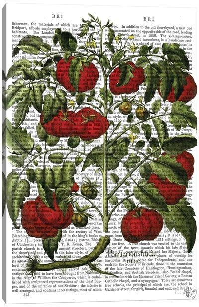Tomato Plant Canvas Art Print