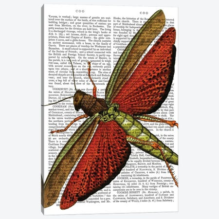 Vintage Grasshopper Canvas Print #FNK1312} by Fab Funky Art Print