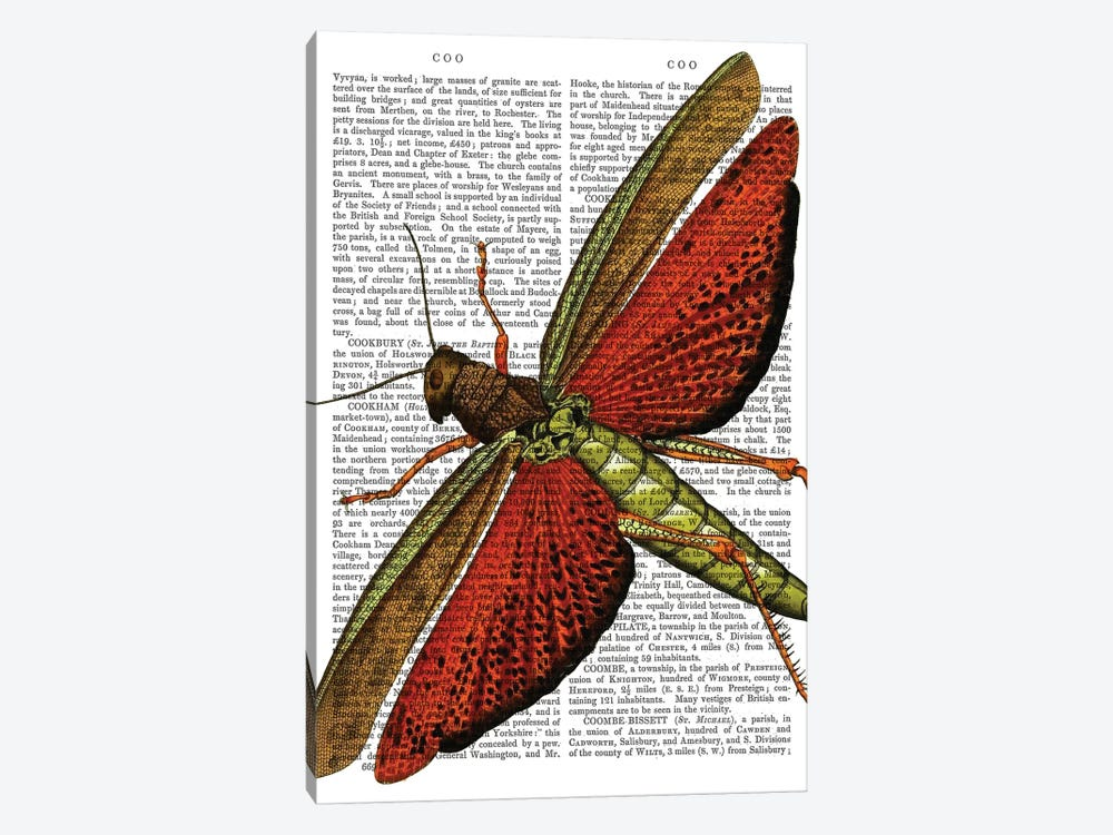 Vintage Grasshopper by Fab Funky 1-piece Canvas Art