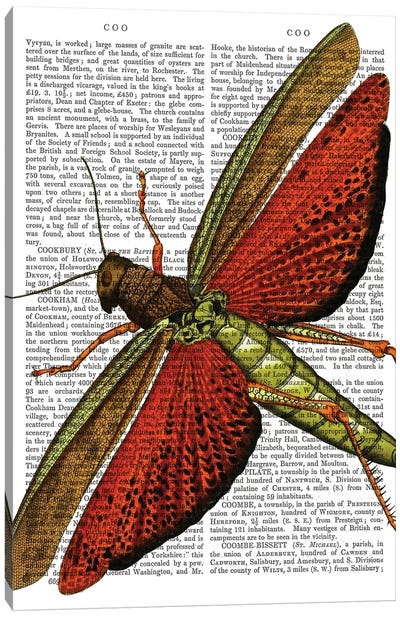 Vintage Grasshopper Canvas Art Print