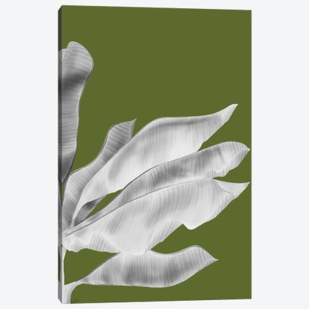 Banana Leaves V Canvas Print #FNK135} by Fab Funky Canvas Art Print