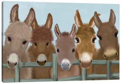 Donkey Herd at Fence Canvas Art Print
