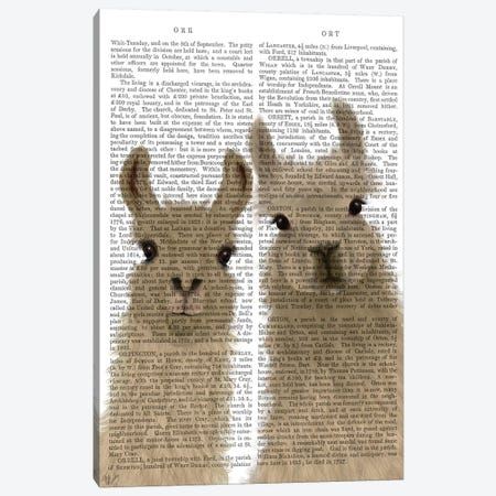 Llama Duo, Looking at You Book Print Canvas Print #FNK1815} by Fab Funky Canvas Print