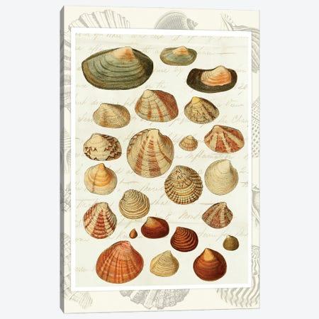 Shells on Vintage Script Canvas Print #FNK1936} by Fab Funky Canvas Artwork