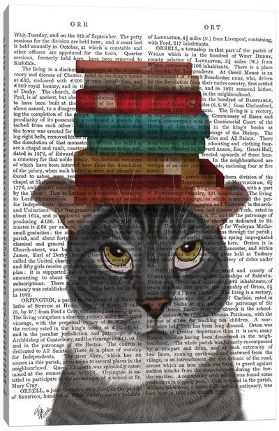 Grey Cat With Books On Head I Canvas Art Print