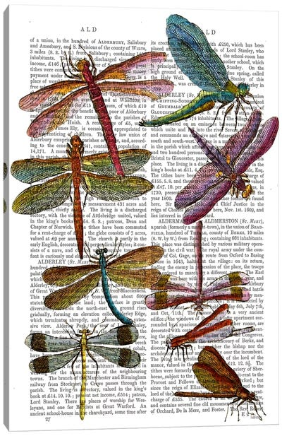 Dragonfly Print III Canvas Print #FNK36