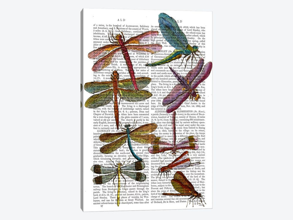Dragonfly Print III by Fab Funky 1-piece Art Print