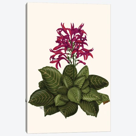 Tropical Flower II Canvas Print #FNK446} by Fab Funky Art Print