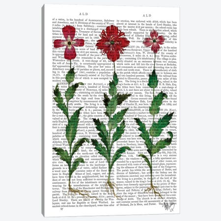 Italian Carnation I Canvas Print #FNK51} by Fab Funky Canvas Wall Art