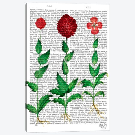 Italian Carnation II Canvas Print #FNK52} by Fab Funky Canvas Art