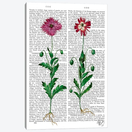 Italian Carnation III Canvas Print #FNK53} by Fab Funky Canvas Artwork