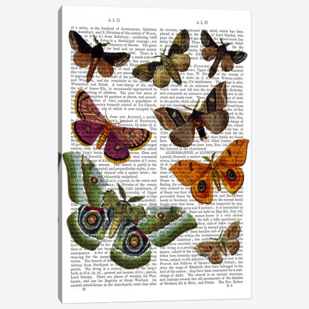 Moth Plate II Canvas Print #FNK61} by Fab Funky Canvas Art Print
