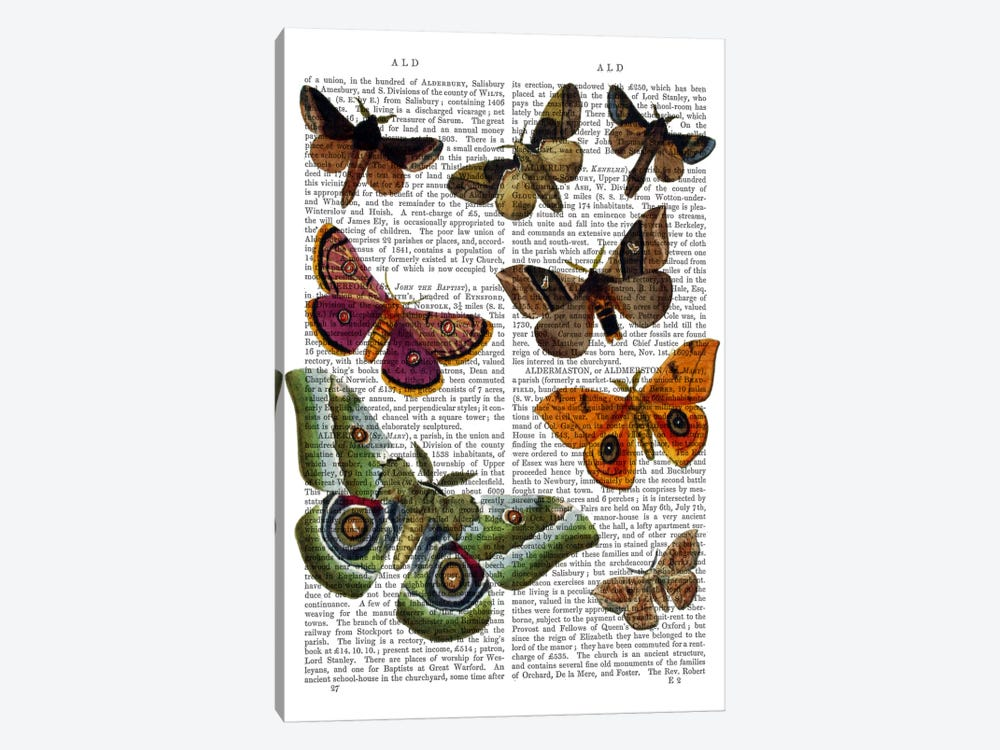 Moth Plate II by Fab Funky 1-piece Canvas Art Print