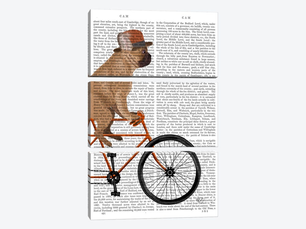 French Bulldog on Bicycle, Print BG by Fab Funky 3-piece Canvas Art Print