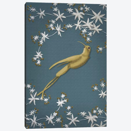 Golden Hummingbird II Canvas Print #FNK671} by Fab Funky Art Print