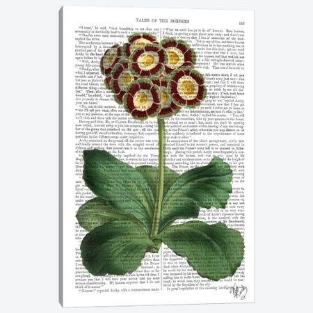 Primula Auricula Canvas Print #FNK71} by Fab Funky Canvas Wall Art