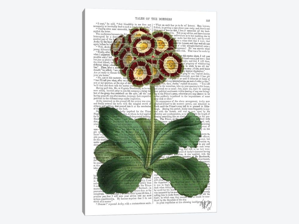 Primula Auricula by Fab Funky 1-piece Canvas Wall Art