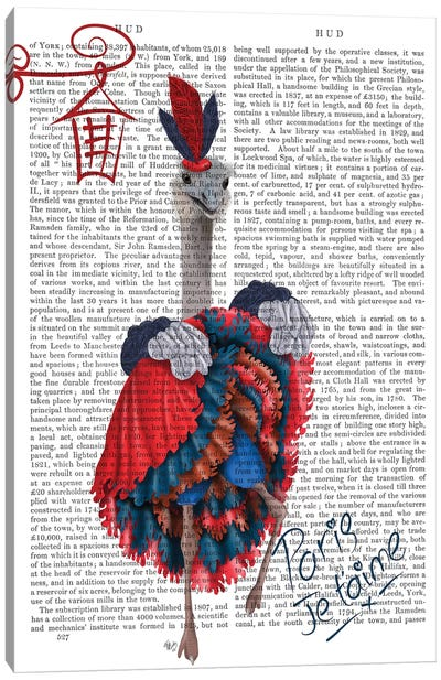 Ostrich, Can Can in Red and Blue, Print BG Canvas Art Print
