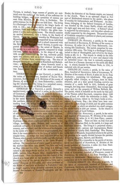 Pomeranian Ice Cream, Print BG Canvas Art Print
