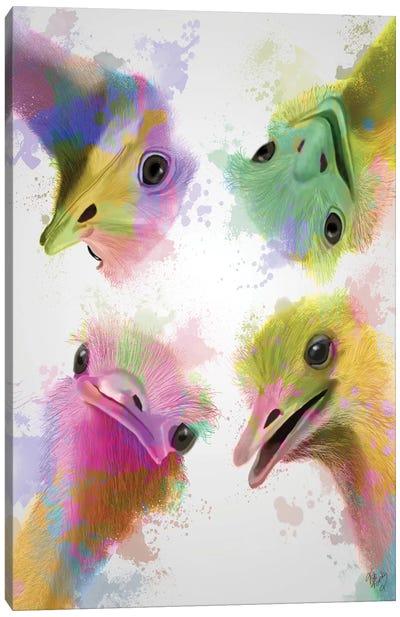 Rainbow Splash Four Ostriches Canvas Art Print