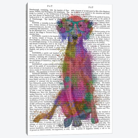 Rainbow Splash Weimaraner, Full, Print BG Canvas Print #FNK818} by Fab Funky Art Print