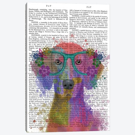 Rainbow Splash Weimaraner, Portrait, Print BG Canvas Print #FNK820} by Fab Funky Canvas Artwork
