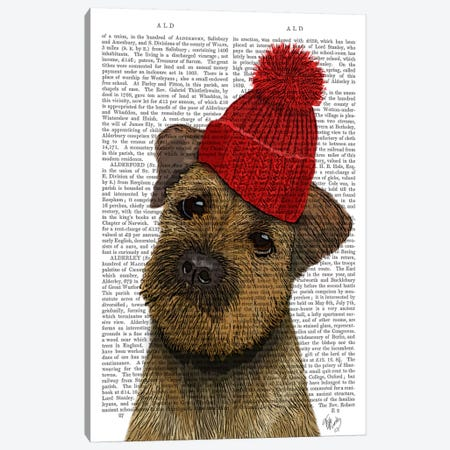 Border Terrier With Red Bobble Hat Canvas Print #FNK929} by Fab Funky Art Print