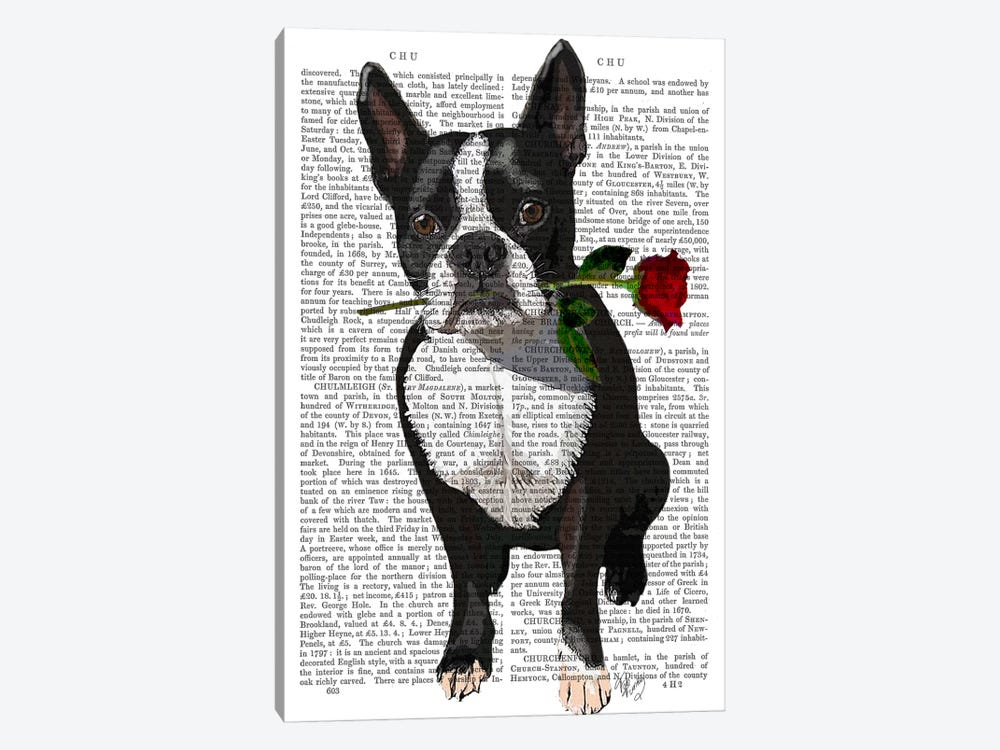 Boston Terrier With Rose In Mouth by Fab Funky 1-piece Canvas Art