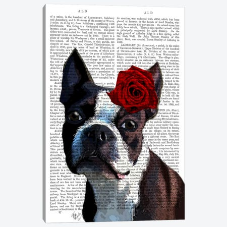 Boston Terrier With Rose On Head Canvas Print #FNK940} by Fab Funky Canvas Print