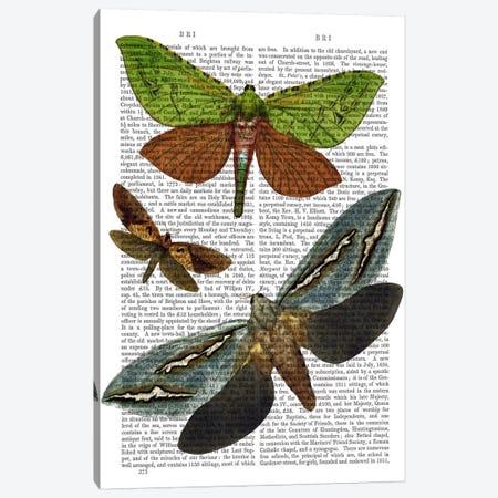 Butterflies I Canvas Print #FNK950} by Fab Funky Canvas Art