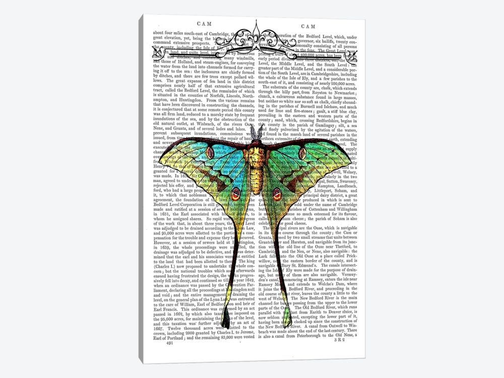 Butterfly On Print BG by Fab Funky 1-piece Canvas Art Print