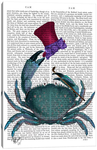 The Dandy Crab Canvas Art Print