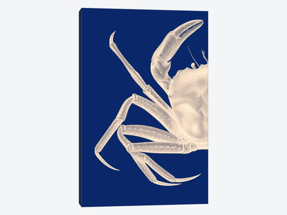 Contrasting Crab In Navy Blue I by Fab Funky 1-piece Canvas Print