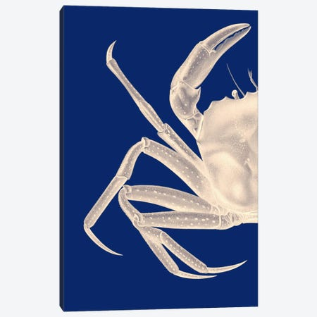Contrasting Crab In Navy Blue I Canvas Print #FNK970} by Fab Funky Canvas Art