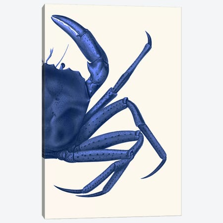 Contrasting Crab In Navy Blue II Canvas Print #FNK971} by Fab Funky Canvas Art
