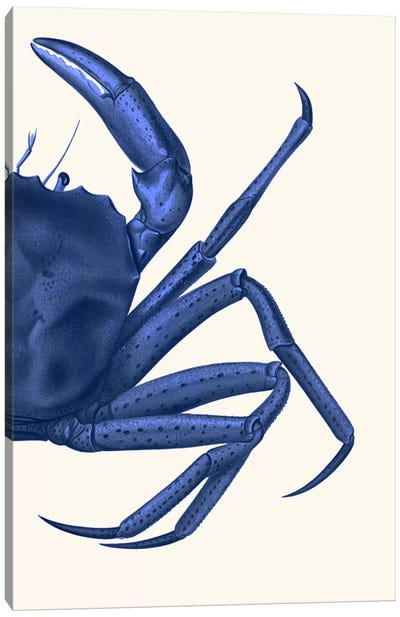 Contrasting Crab In Navy Blue II Canvas Art Print