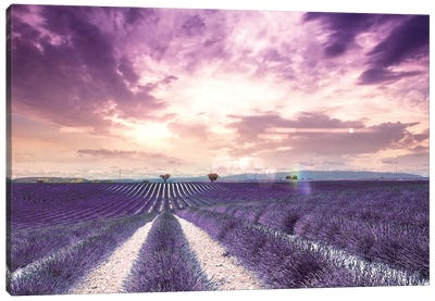 The Wonder Of Lavender Fields In South Of France, Valensole Canvas Art Print