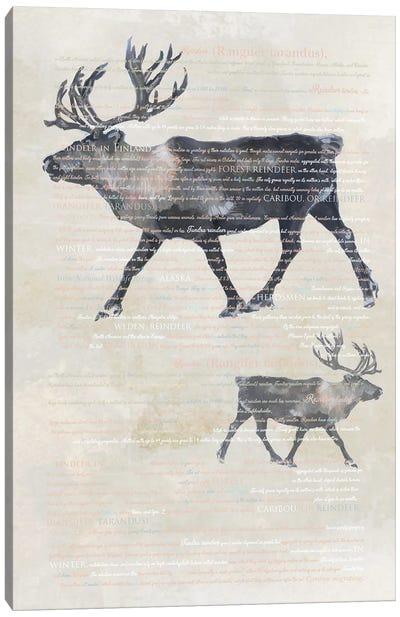 Animal Art - Reindeers Canvas Art Print